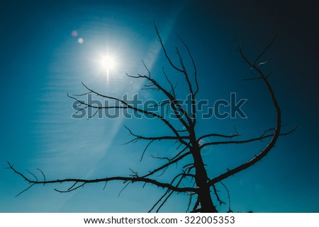 silhouette of a dead tree against a blue sky - stock photo