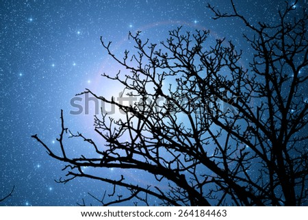 Silhouette of a defocused tree with sharp stars. Stars are digital illustration - stock photo