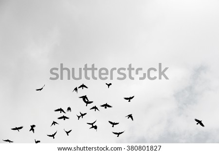 Silhouette of a flock of crows flying up into a cloudy sky.  - stock photo
