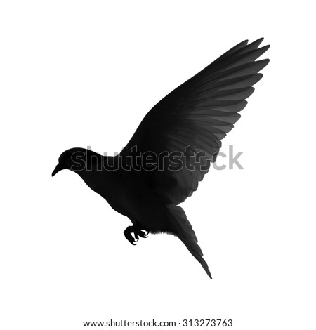 Silhouette of a flying dove on a white background - stock photo