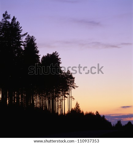 Silhouette of a forest, Sweden - stock photo