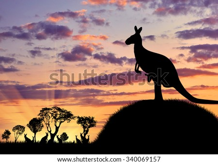 Silhouette of a kangaroo with a baby on a background of a beautiful sunset and the herd away - stock photo