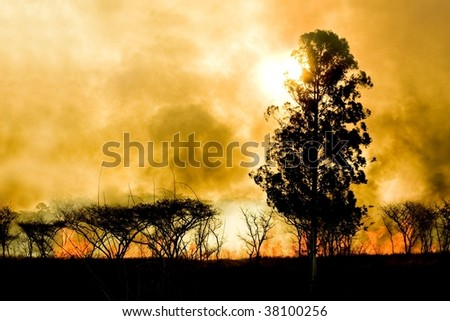 Silhouette of a tree against burning bush - stock photo