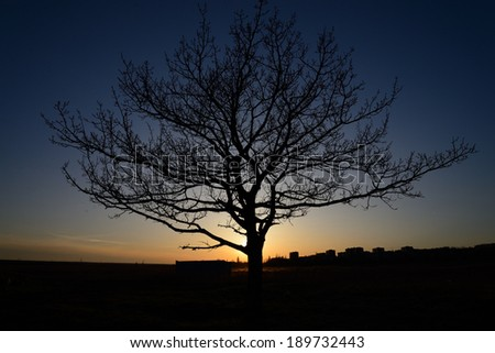 Silhouette of a tree against the setting sun - stock photo