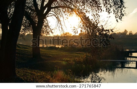 Silhouette of a tree at dawn, sunset on the lake with tree, sunset on the oak grove on a lake, sunset on the riverbank, oak tree on the lake at sunset, sun above the lake, sunset on the autumn river - stock photo