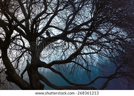 Silhouette of a tree with a crow, a lot of curving branches,  natural abstraction - stock photo