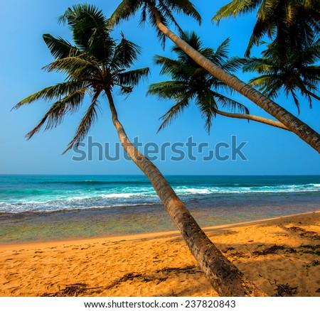 Silhouette of a tropical tree at sunset - stock photo