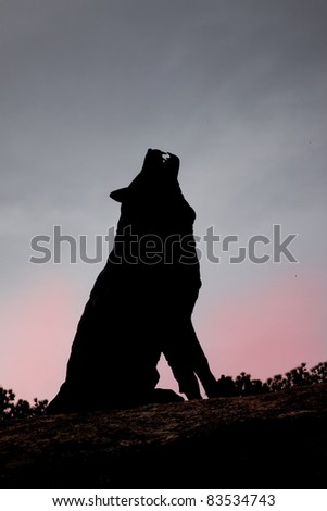 silhouette of a wolf howling - stock photo