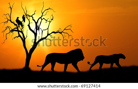 silhouette of african male and female lion against orange dusk dawn sun with tree and vultures - stock photo