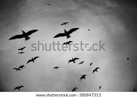 Silhouette of birds flying through a surreal gray sky, black and white - stock photo