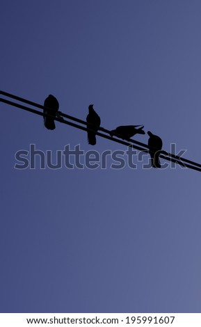 Silhouette of birds on wires over blue sky - stock photo