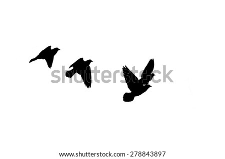 silhouette of black birds on a white background - stock photo