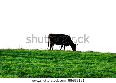 Silhouette of cow above green grass. - stock photo