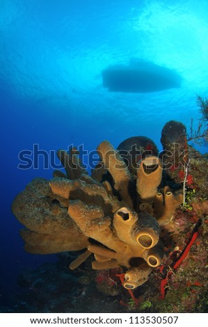 Silhouette of Dive Boat with Brown Tube Sponges - stock photo