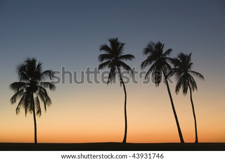 Silhouette of four palm trees on the beach - stock photo