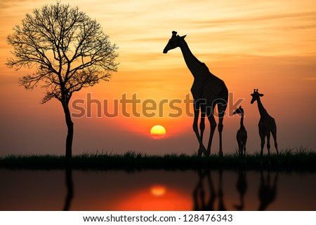 Silhouette of giraffe with reflection in water - stock photo