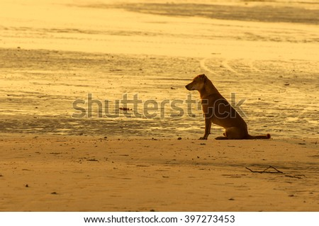 Silhouette of lonely dog sitting along water edge at sunrise or sunset - stock photo