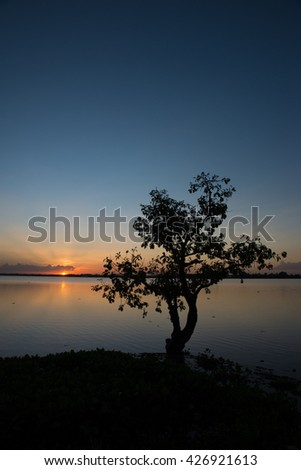 Silhouette of lonely tree against blue and golden background ,sunset time,Thailand - stock photo