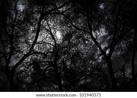 Silhouette of mystery forest against dramatic sky at night - stock photo