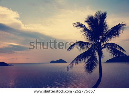 silhouette of palm tree at sunset and sea landscape - stock photo