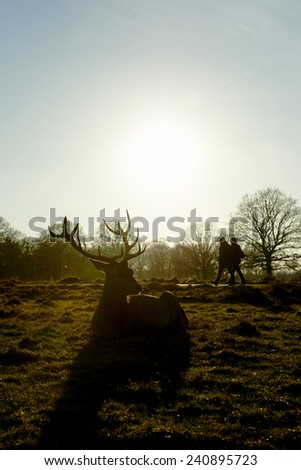 Silhouette of red deer lying in atumnal park in late afternoon light, with two people walking past the background. - stock photo
