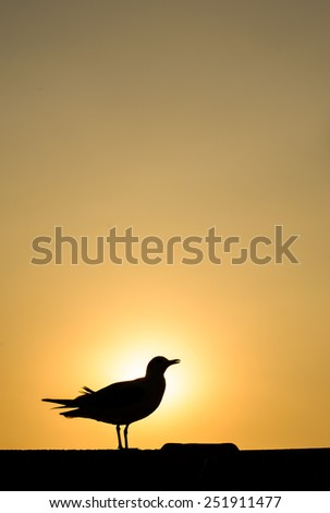 Silhouette of seagull with sunset time on the  beach - stock photo