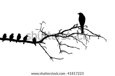 silhouette of the birds on branch - stock photo