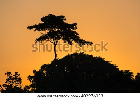 Silhouette of the trees in the tropical jungle or African savanna against sunset sky - stock photo