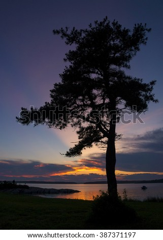 Silhouette of tree at sunset - stock photo