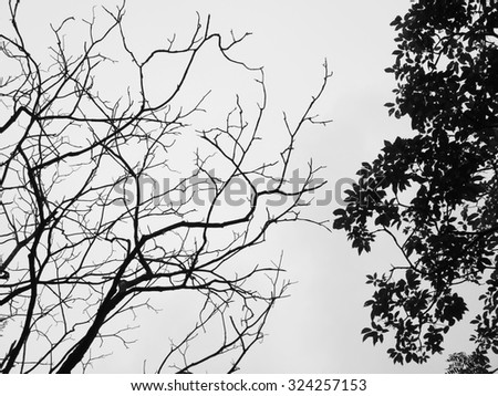 Silhouette of tree. Black and white - stock photo
