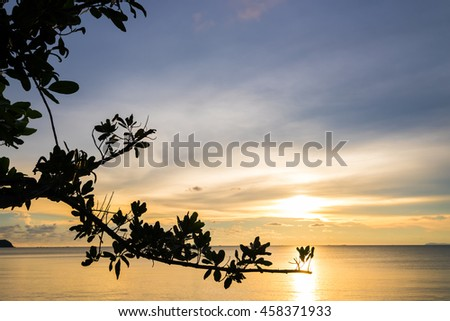 Silhouette of tree branch with silver golden sunset and sunrise sky when the sun goes down background. - stock photo