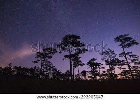 Silhouette of tree on night sky with lot of shiny stars at national park - stock photo