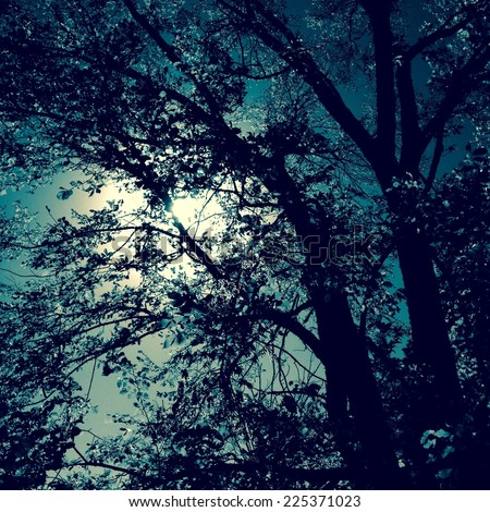 Silhouette of trees against the bright moon light on the night sky, instagram style - stock photo