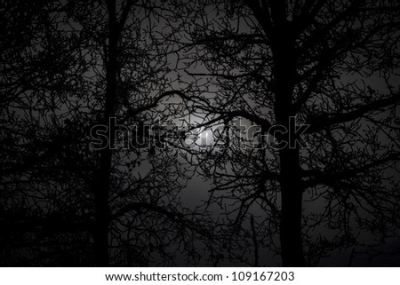 Silhouette of trees with winter sun - stock photo