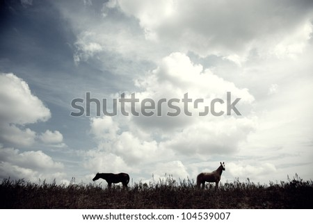 Silhouette of two horses outdoors at the evening - stock photo