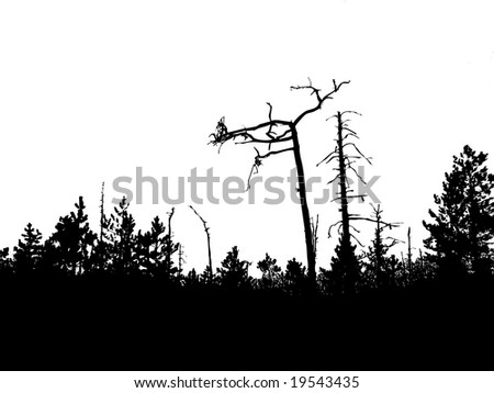 silhouette old wood - stock photo