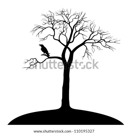 silhouette ravens on tree isolated - stock photo