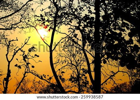 silhouette tree during sunset - stock photo