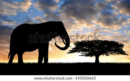 Silhouette two elephants in the sunset - stock photo