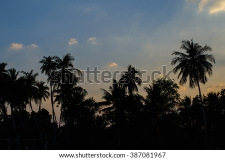 Silhouetted of coconut tree and sky - stock photo