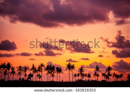 Silhouetted of coconut tree during sunset  - stock photo