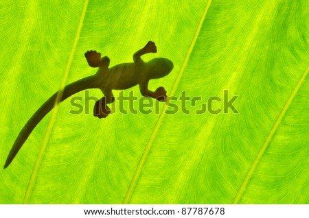 Silhouetted of lizard on green leaf - stock photo