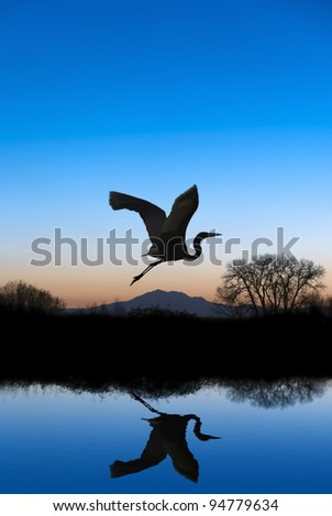 Silhouetted Snowy Egret flying at sundown over quiet Winter pond on wildlife refuge, Mount Diablo in bacground, San Joaquin Valley, California - stock photo
