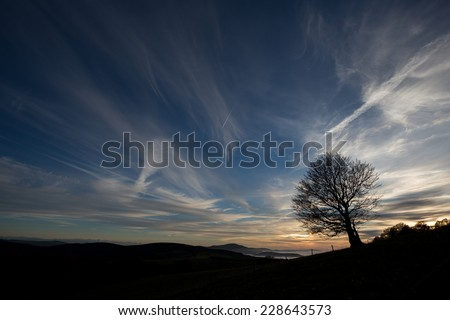 silhouetted tree in sunset sky  - stock photo