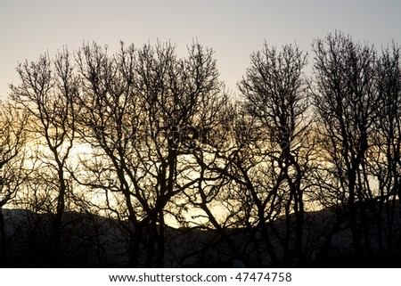 Silhouetted trees against evening sky - stock photo