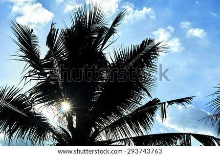 Silhouettes coconut leaves behind sun spark. sky background - stock photo