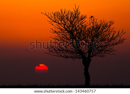 silhouettes of dead tree against sunset background - stock photo