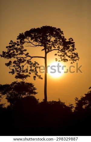 Silhouettes of exotic tree and jungle on the Catatumbo River near the Maracaibo Lake during a beautiful vibrant orange sunset. Venezuela - stock photo