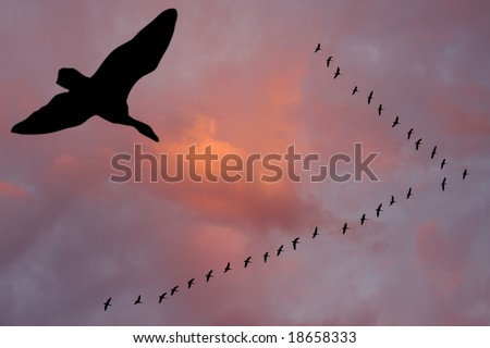 Silhouettes of flying geese in V formation. - stock photo