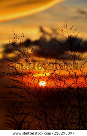 silhouettes of grass blades in front of sunset - stock photo
